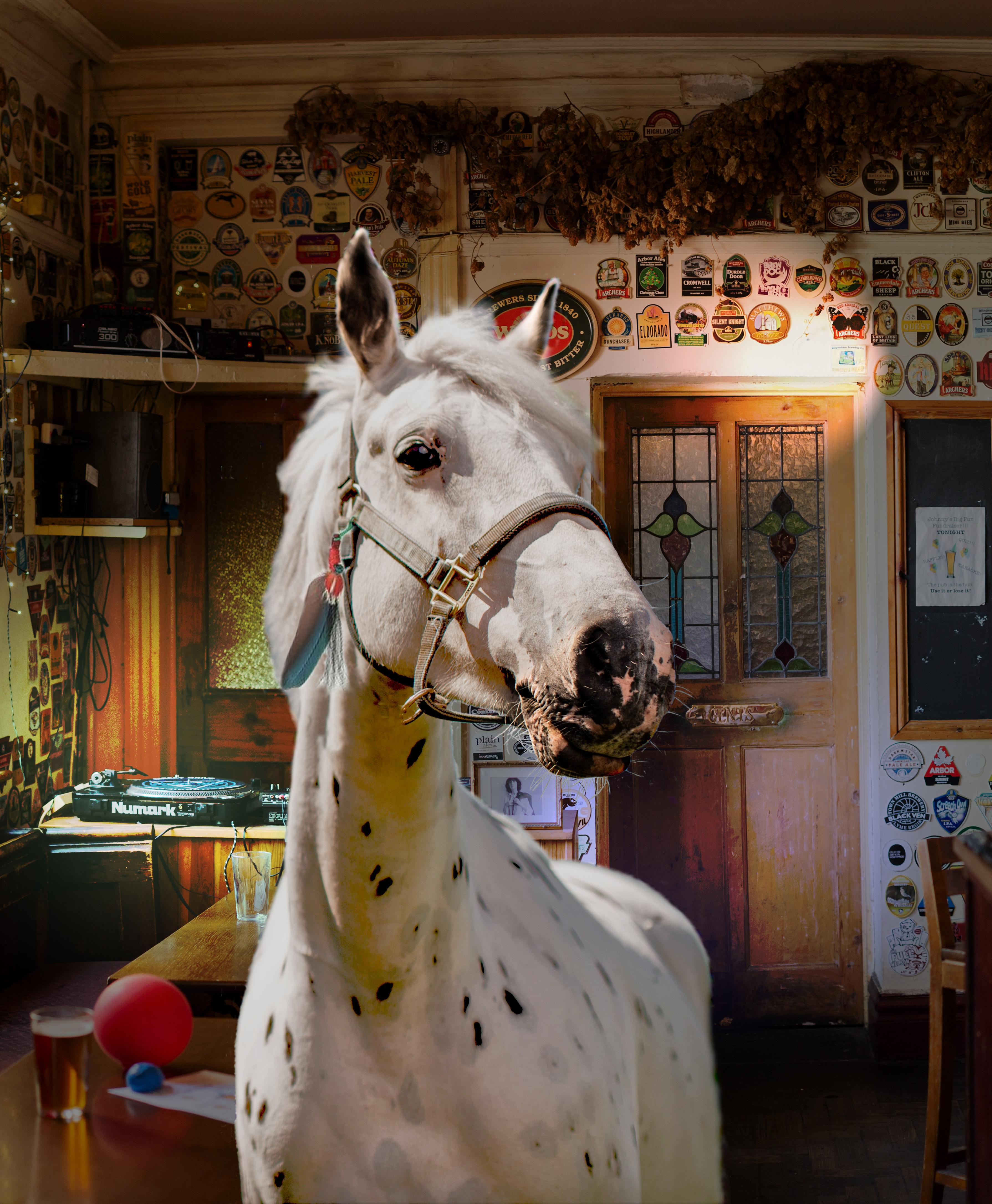 Wassail Theatre: Horses! Horses!